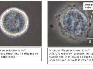 Эффект инактивации аллергенов клеща домашней пыли.